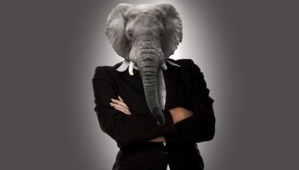 elephant sales3
